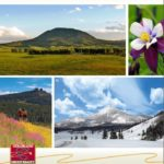 Colorado Group Realty Mid-Year Report